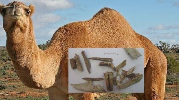 عظام جمل بفلسطين تصحح قصة التوراة عن النبي إبراهيم
