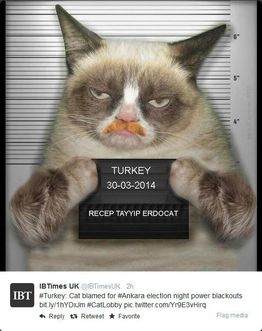 Turkish Minister Blames Cat For Power Blackout