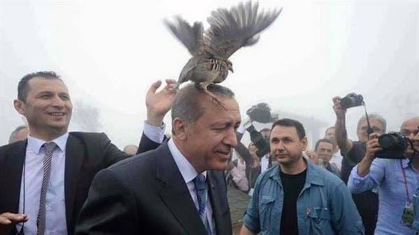 ماذا يفعل هذا الطائر فوق رأس أردوغان؟ Da1f5913-b03f-4ebb-9efe-ba582218e62a_16x9_600x338