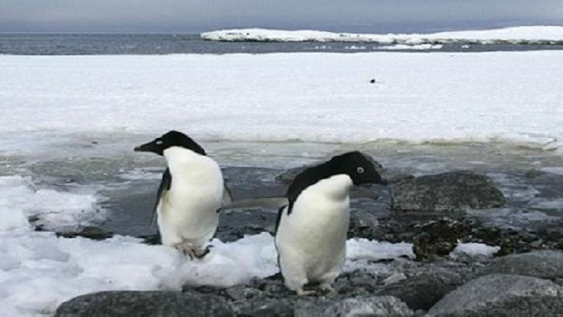"""The expedition team stress the need to protect the """"Antarctic from all sorts of damage that may be caused by human activity."""" (Reuters)"""