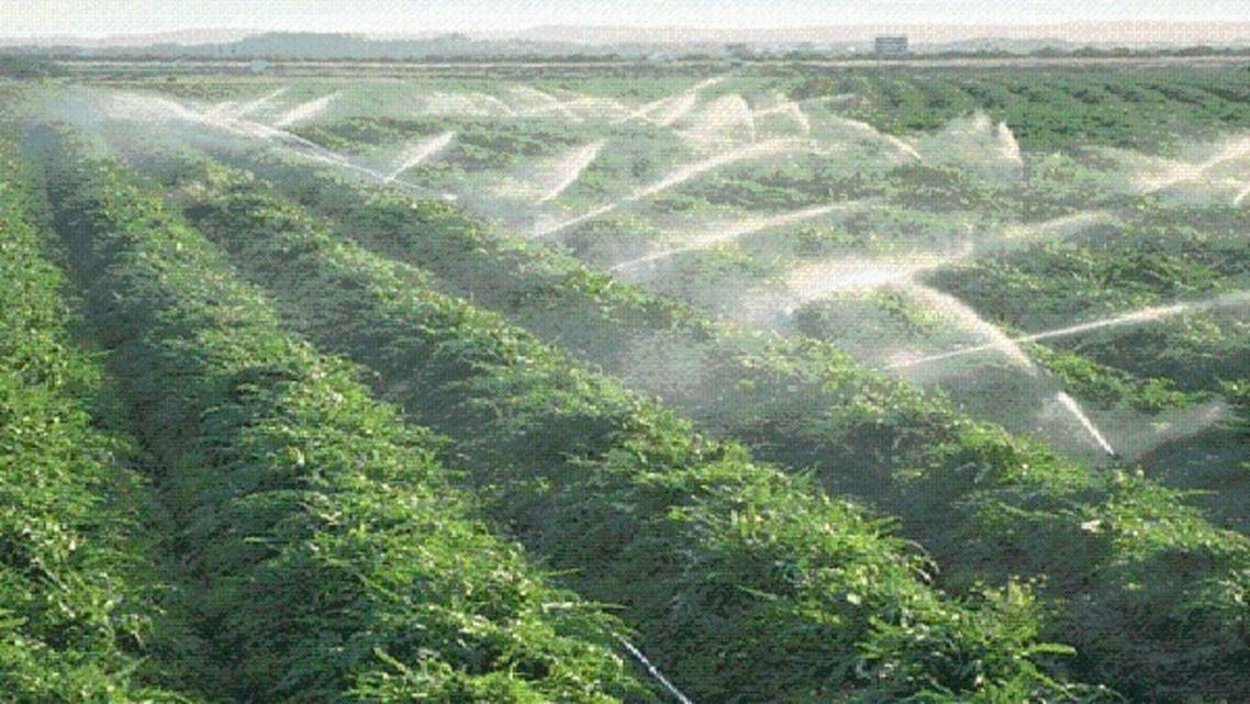 7 مبادرات لتغيير واقع الزراعة في السعودية