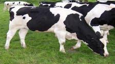 تقليص استهلاك اللحوم يحد من الاحترار المناخي