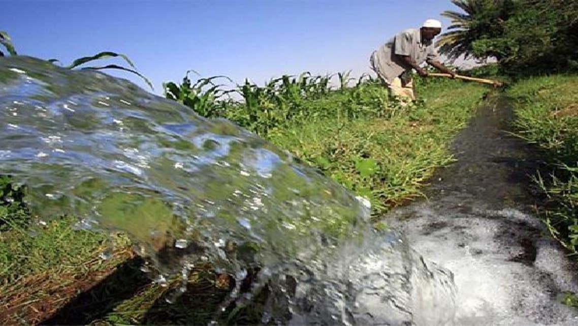 الزراعة من أهم القطاعات في الاقتصاد المصري
