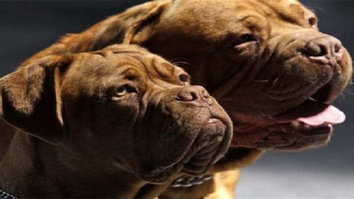 الكلاب في المغرب مصدر قلق للعديد من الأشخاص