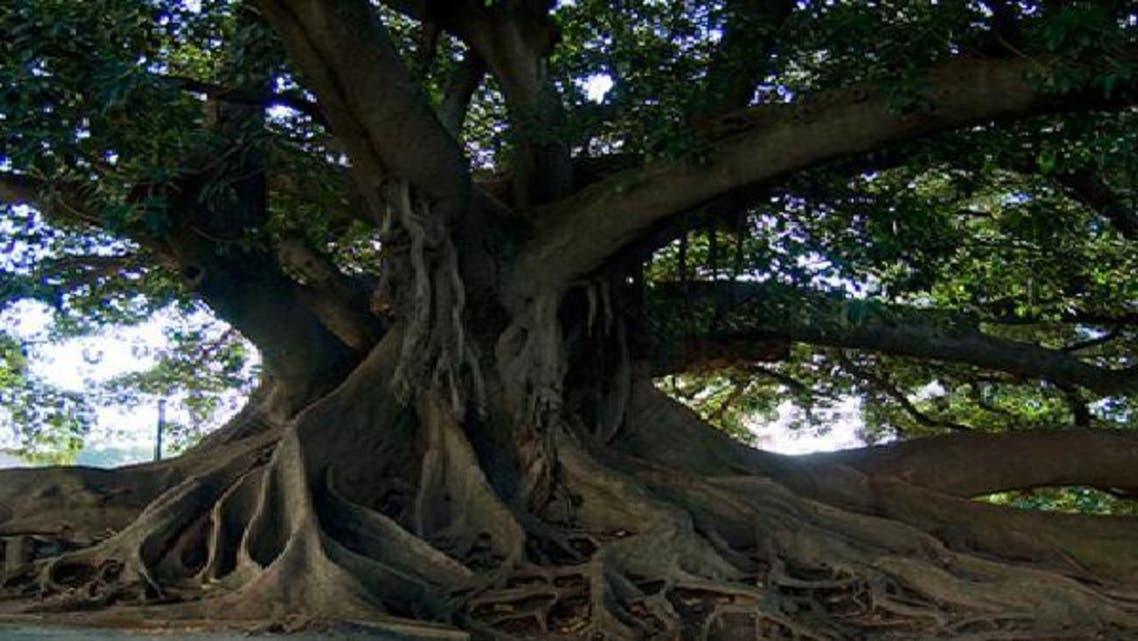 شجرة تقطع الكهرباء عن 3.5  مليون أرجنتيني