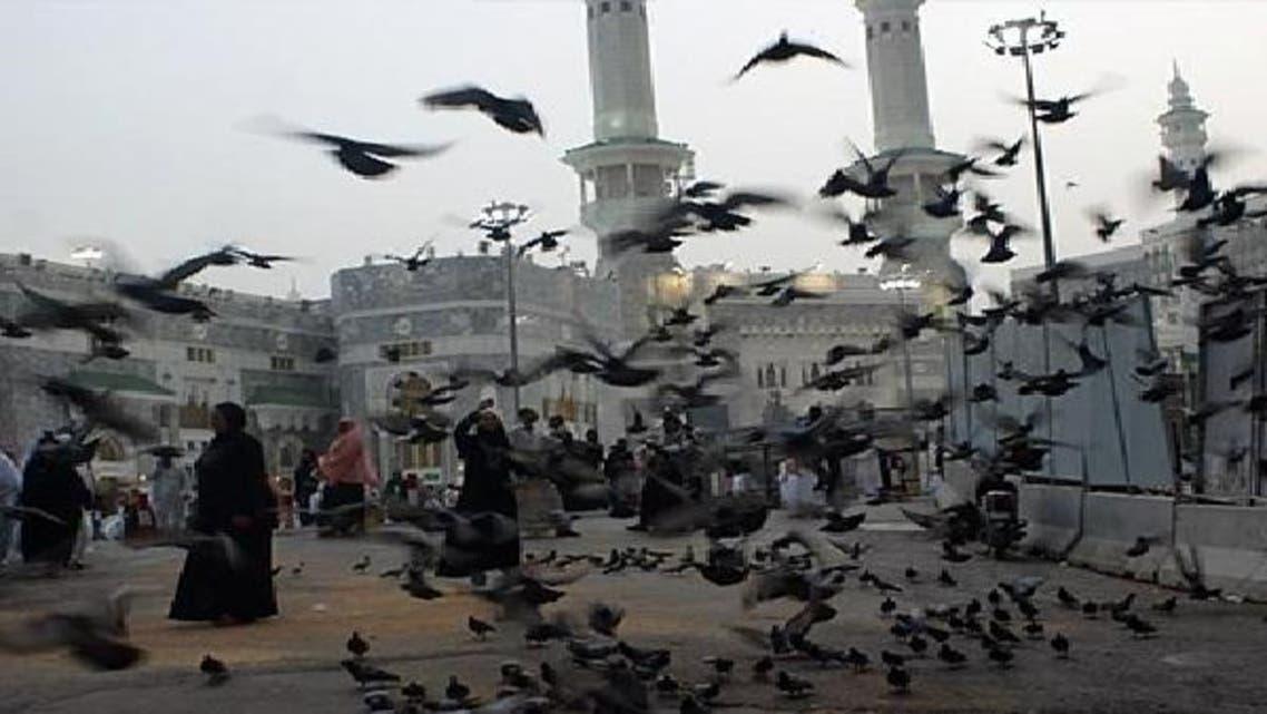 حرم کعبہ کی حدود میں 4 ملین کبوتر مارنے پر تنازعہ