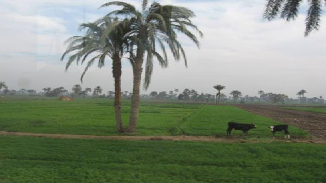 مصر: 2.4 مليون فدان زراعية متاحة للاستثمار الأجنبي