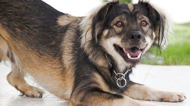 كلب يُنقذ صاحبته من الانتحار