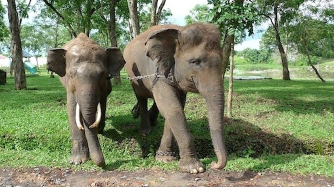 elephant Indonesia