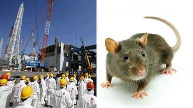 فأر يتسبب في انقطاع الكهرباء عن محطة نووية يابانية