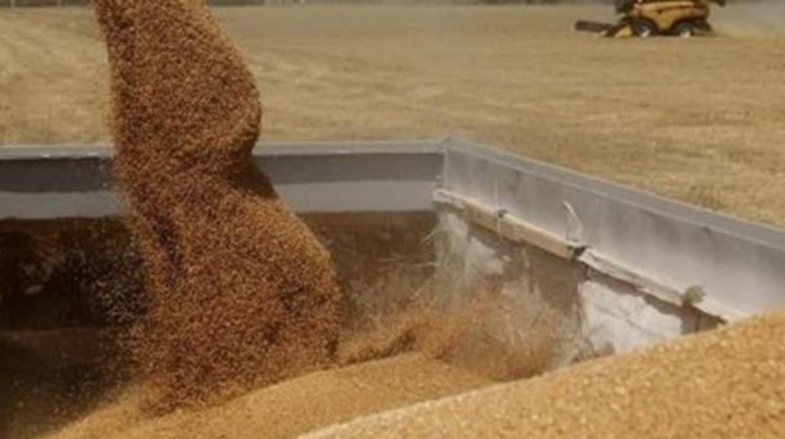 Egypt's wheat imports are sharply down this year as the country struggles through a political and economic crisis. (Reuters)
