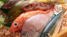 السعودية تستهدف زيادة إنتاج الأسماك إلى 10 أضعاف
