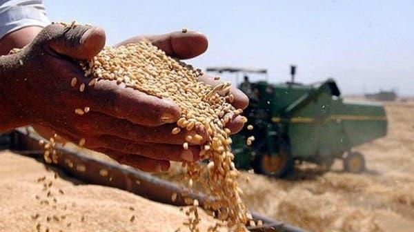 تشتري 25 ألف طن من القمح في مناقصة-الأردنية للصوامع