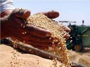 """""""الأردنية للصوامع"""" تشتري 25 ألف طن من القمح في مناقصة"""