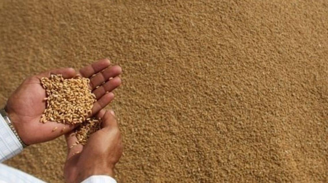 Wheat AFP