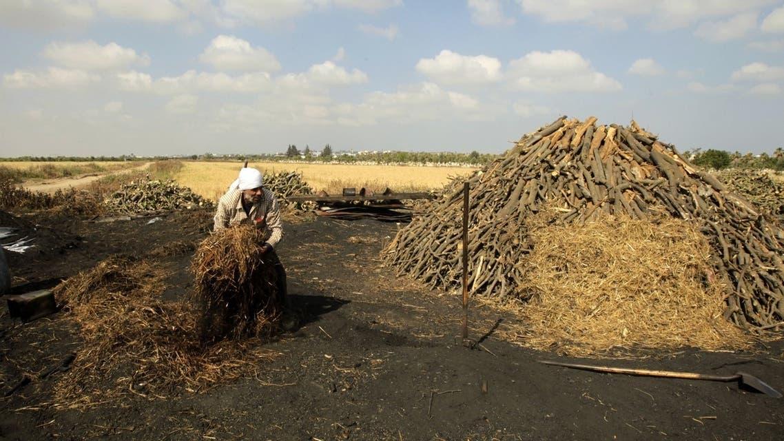 Gaza charcoal industry