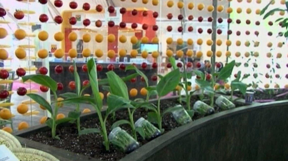 morocco agriculture fair