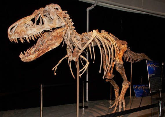 هيكل عظمي لديناصور في متحف