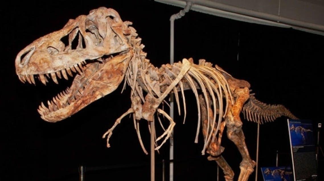 عظام ديناصور