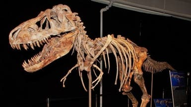 اكتشاف عظام ديناصور عمرها 110 ملايين سنة بتونس