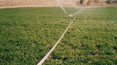 شركة زراعية لبنانية تستثمر 800 مليون دولار في السودان