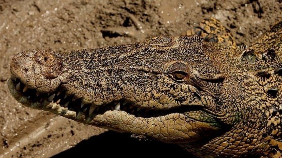 crocodile AFP