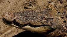 العثور على تمساح عمره 40 عاماً بمنزل في لوس أنجلوس