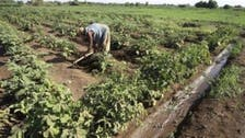 Lebanese firm to invest $800m in Sudan agriculture project