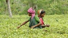 India's tea sales to Iran surge despite sanctions