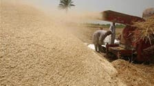 Egypt to start new local wheat procurement system in April 2016
