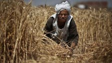 Egypt has less than 2 months imported wheat left, says ex-minister