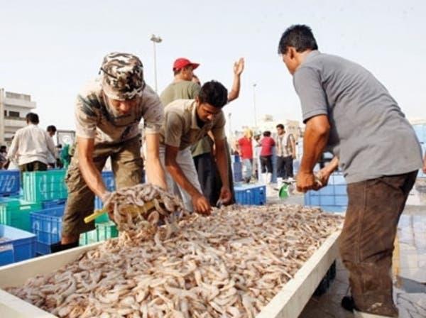 """توقعات بحدوث أزمة """"روبيان"""" بسبب مواعيد الصيد الجديدة"""