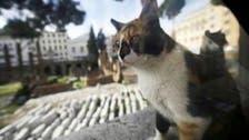 Cat Fight: Dubai to fine restaurants for having felines on premises