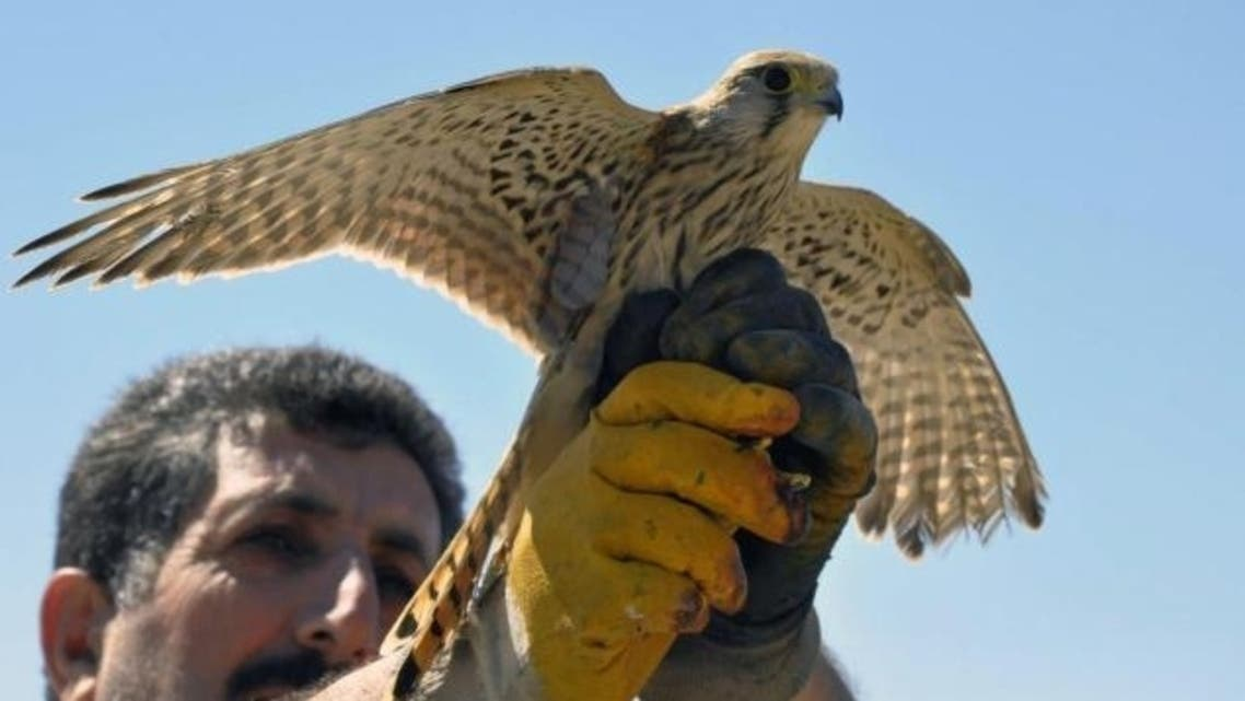 Bird Turkey Israel (AP)