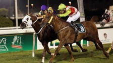 Reign in your enthusiasm: Arab horse racing goes to Belgium