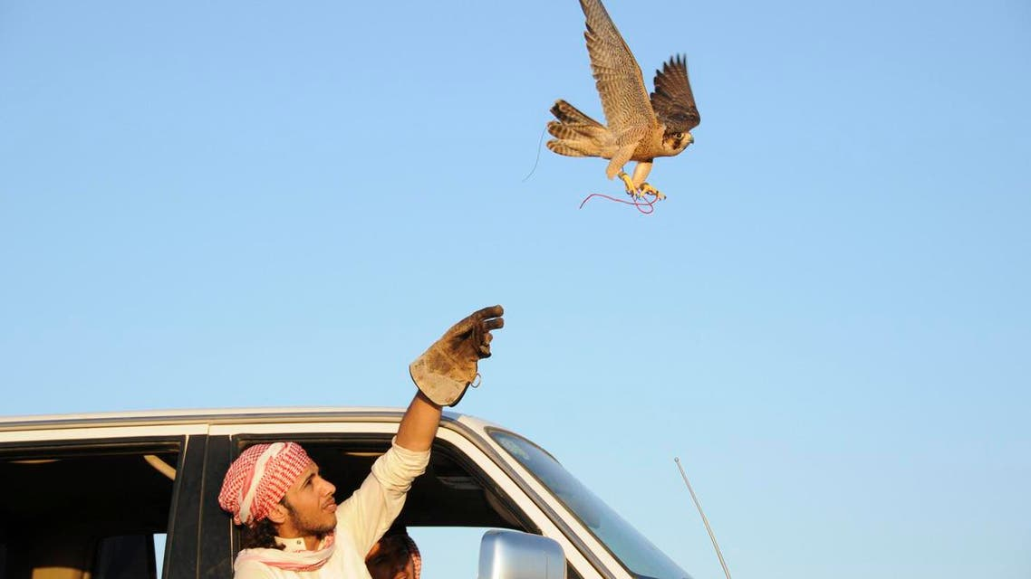 Falconry in Saudi Arabia