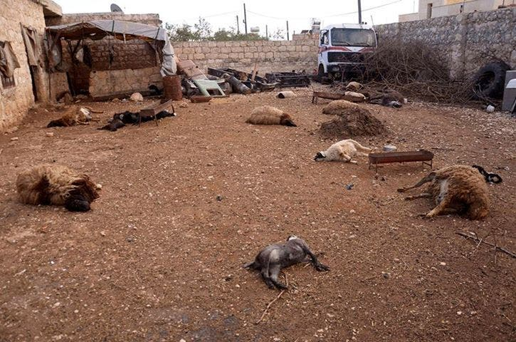 Dead animals pictured in Syria, opposition forces say they died from exposure to a chemical agent (File photo: Reuters)