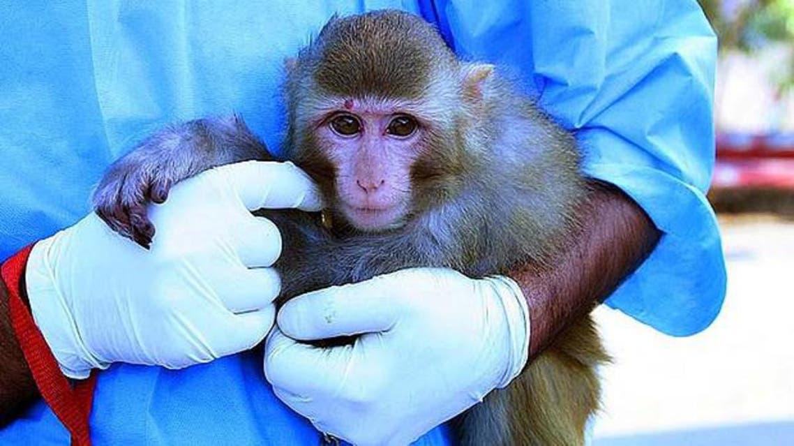 monkey afp