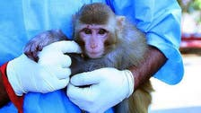Egypt jails woman for 3 years for 'harassing' monkey