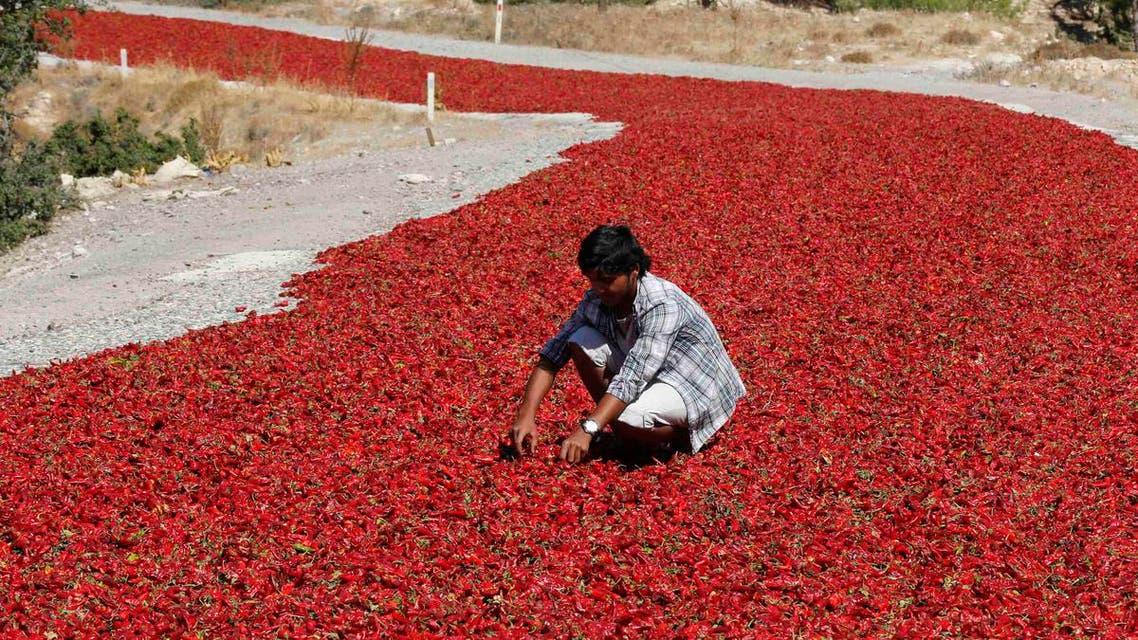 kkes Sahin (16) checks hot peppers laid out on a road to dry under the sun in Kilis province September 12, 2013.