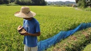 أسعار الغذاء العالمية ترتفع في يونيو لأول مرة في 2020