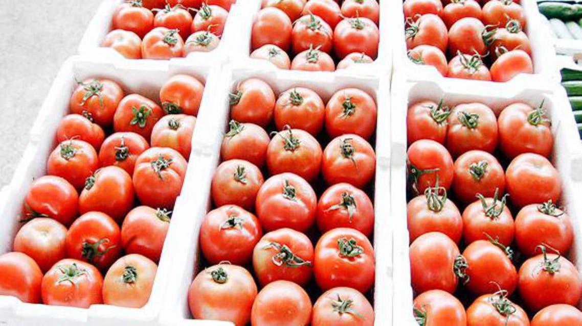 طماطم بندورة