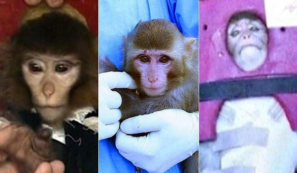 """Images of the monkey Iran said it sent into space, before saying one of the photos of was of a different animal: at left, the original """"before"""" launch image, and in the center, the """"after"""" launch photo. (Image source: The Telegraph)"""