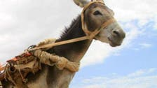 Egypt farmer held for naming donkey after top general