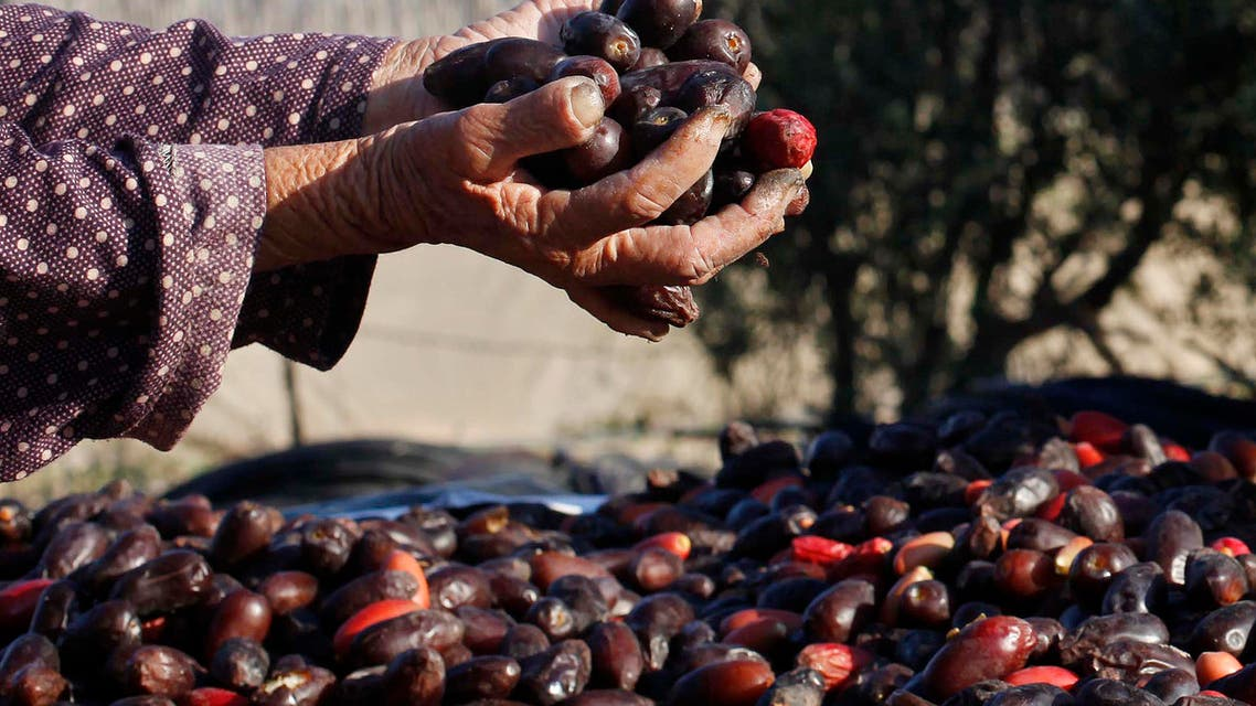 Date picking in Palestine