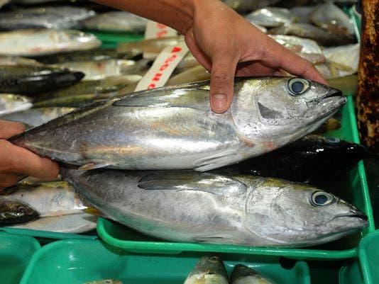 fish reuters