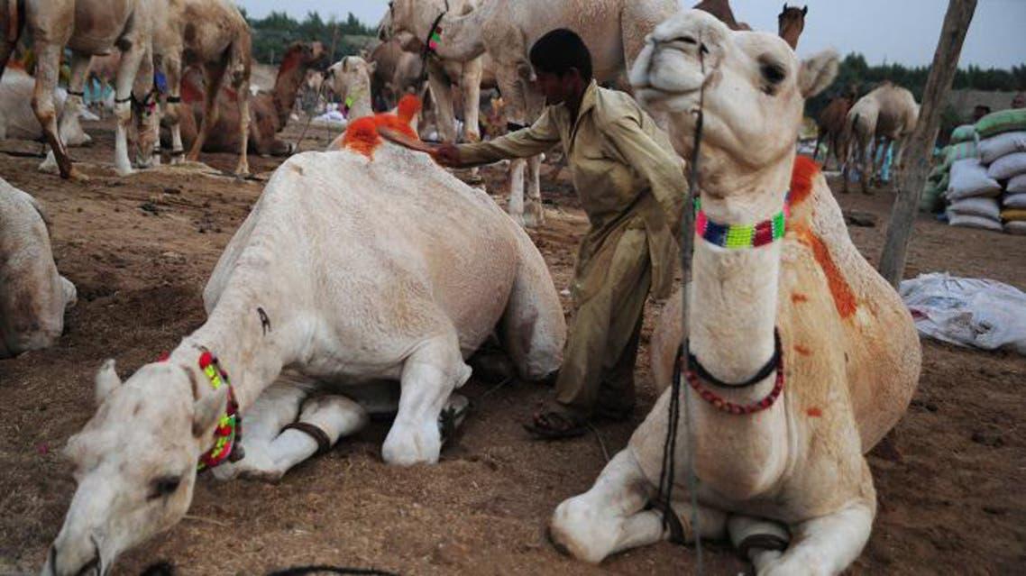 Pakistanis prepare for Eid al-Adha