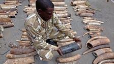 Kenya seizes smuggled ivory destined for Turkey