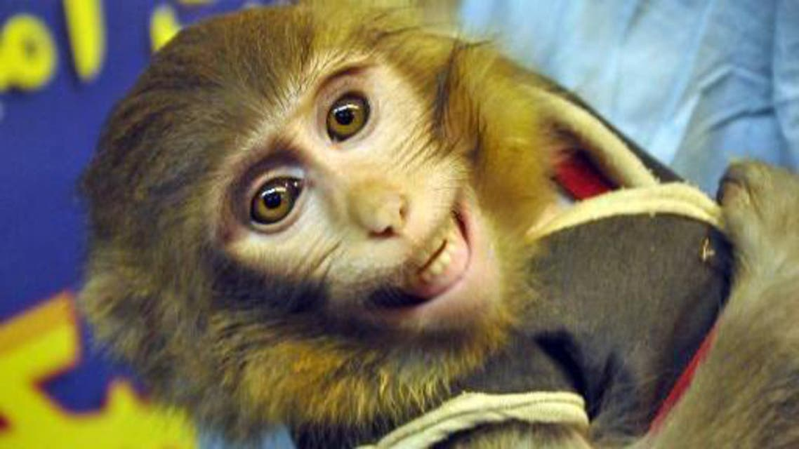 An image obtained from Iranian Students' News Agency (ISNA) shows a monkey that was launched into space and brought back to Earth, on January 28, 2013. (AFP)