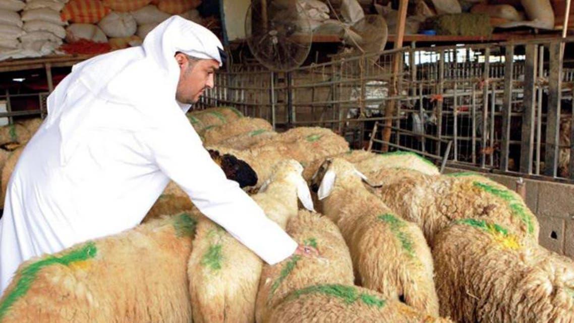 السعوديون ينتقون اضاحي العيد